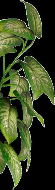 etusivu kasvi